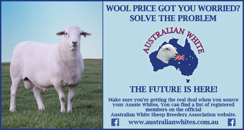 Wool price got you worried? Solve the Problem. Australian Whites