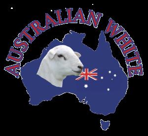 Australian White Sheep