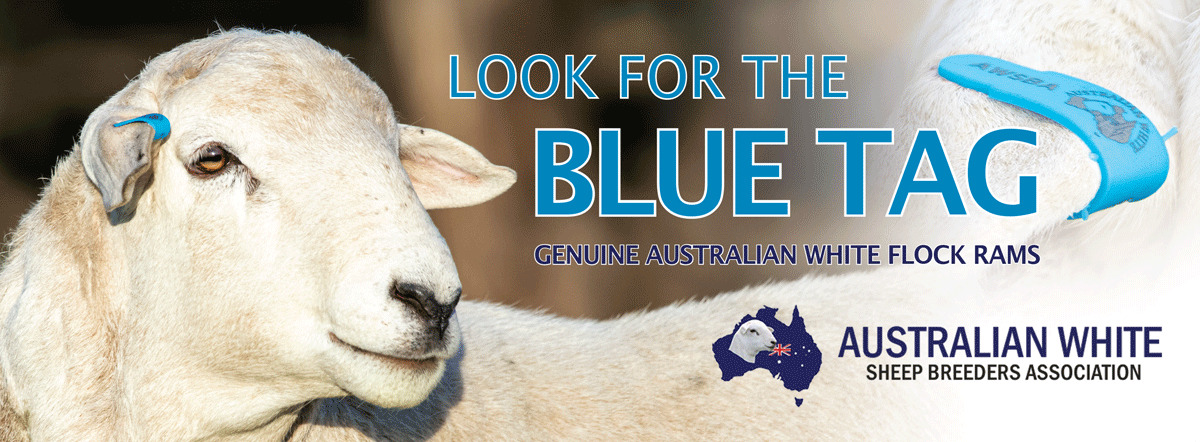 Aust-White-Sheep-Association-Ad-260mmx92mm (002)